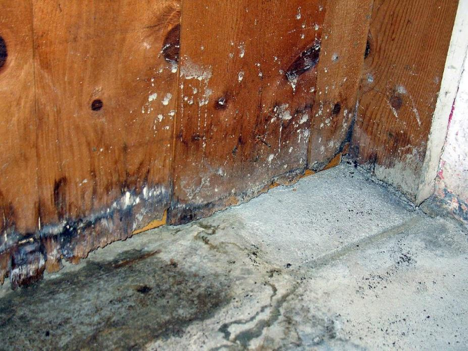 MOLDY BASEMENT IDENTIFY TREAT AND PREVENT MOLD GROWTH